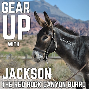 Gear Up with Jackson the Red Rock Burro!